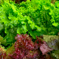 ShopProduce_200px_salad01