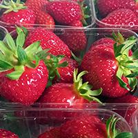 ShopProduce_200px_strawberries